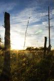 Kansas Sunset. A very beautiful Kansas sunset Royalty Free Stock Images