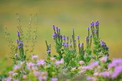 Kansas Wildflowers Stock Photos