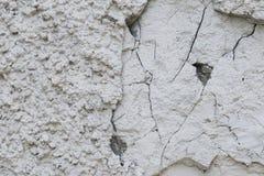 Kanstött och sprucken grov grungy textur av den vita rappade stenväggen royaltyfria bilder
