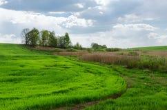 Kant av den grönt fält sådde jordbruks- skörden Fotografering för Bildbyråer