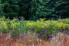 kant av en mörk skog Royaltyfri Bild