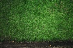 Kant av gräsmattagräs Arkivbild