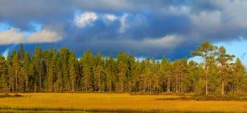 Kant av skogen och på kanten av sjön Arkivfoto