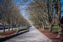 Kant Island in Kalinigrad Strada ed alberi in parco fotografia stock
