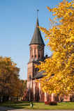 Kant's cathedral. Kaliningrad Royalty Free Stock Image