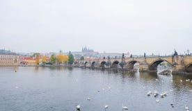 Kant van Charles Bridge bij de ochtend, Praag Stock Fotografie