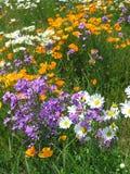 Kant van de weg Wildflowers 2 Stock Fotografie
