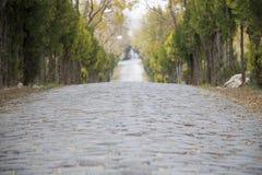 Kant van de wegbomen in de steenachtige herfst stock afbeeldingen