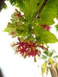 Kant van de wegwildflowers stock afbeelding