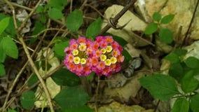 Kant van de wegwildflowers royalty-vrije stock afbeeldingen