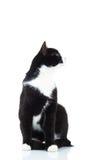 Kant van een kat die en omhoog aan iets zitten kijken Stock Afbeeldingen