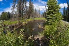 Kant van meer, Alaska , de zomer Royalty-vrije Stock Fotografie