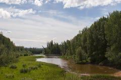 Kant van meer, Alaska , de zomer Stock Foto's