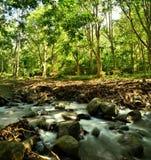 Kant van rivier in bos Royalty-vrije Stock Afbeeldingen