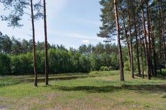 kanta av skogen Arkivfoto