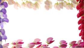 kantad blommaram Arkivfoto