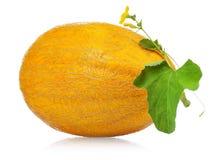 kantalupa melon zdjęcia royalty free