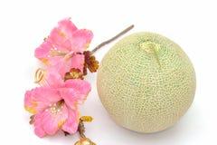 Kantalupa melon z kwiatem na białym tle obrazy royalty free