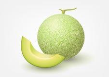 Kantalupenmelone, Fruchtvektorillustration Stockfotos