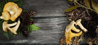 4 kantarell isolerade vita champinjonstycken Royaltyfria Foton
