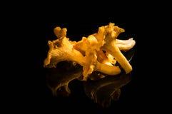 4 kantarell isolerade vita champinjonstycken Arkivbilder