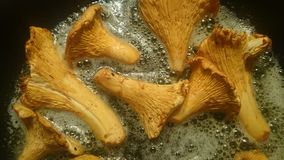 Kantarellen plocka svamp i smör Arkivbild