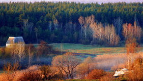 Kanten av skogen Arkivbild
