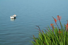 kanten blommar floden Arkivbilder