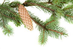 kanten branches jul över treewhite Arkivfoton