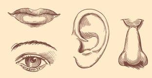 Kanter ögon, öron, näsa tecknade kvinnor för framsidahandillustration s Retro gravyr för tappning Arkivbild
