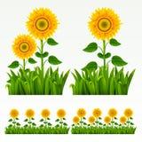 kantgräs stock illustrationer