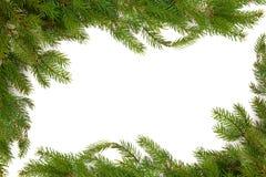 kantgran sörjer spruce arkivfoton