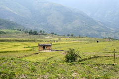 Kanthallur down valley-terraced cultivativation Royalty Free Stock Image