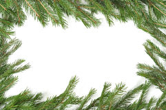 kantjulgreen Royaltyfri Fotografi