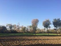 Kantjustera fältet med torra träd och bakgrund för blå himmel arkivfoto