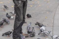 Kantjusterad bild av mannen och massor av duvafåglar på SoHo, New York royaltyfri foto