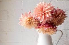 (Kantjusterade) rosa dahlior för korall, Arkivbild