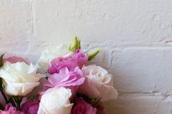 (Kantjusterade) rosa och vita blommor, Arkivfoto