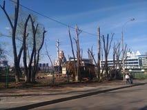 Kantjusterade vårträd mot bakgrunden av kyrkan och dagiset royaltyfri foto