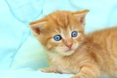 Kantjusterat skott av den gulliga röda kattungen Royaltyfria Bilder