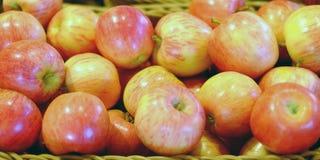 Kantjustering av äpplen Många typiska mogna äpplen i en plast- ask arkivfoton