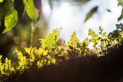 kantljus av bladet Arkivfoto