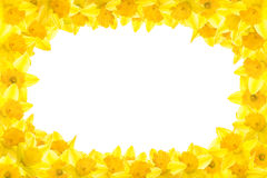 kantpåsklilja Royaltyfri Bild