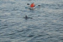 Kanu mit Delphinen Stockfotos