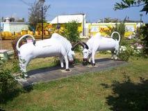 Kanyakumari Tamil Nadu, staty för Indien - Oktober 7, 2008 vit färgsten av 2 slåss tjurar arkivfoton