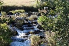 Kaombe-Fluss Sambia Stockfotos