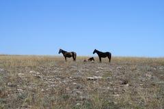 Kap Tarkhankut und Pferde Stockfotografie