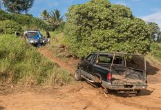 Abandoned truck on Kauai beach being towed royalty free stock image