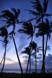 Kapaa Palm tree silhouette. Kapaa Kauai Hawaii palm trees on the beach silhouette early in the morning light Stock Photos