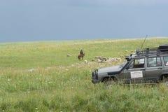 Ποιμένας με τα πρόβατα Το κοπάδι βόσκει στο λόφο Πράσινο Hill Θερινή περίοδο στοκ φωτογραφία